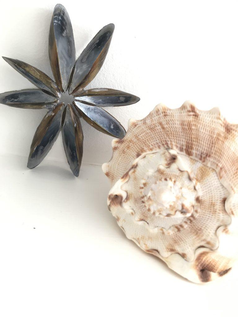 Stern aus Muscheln ganz schnelles DIY. Muscheldeko. #Chalet8, #Muscheldeko